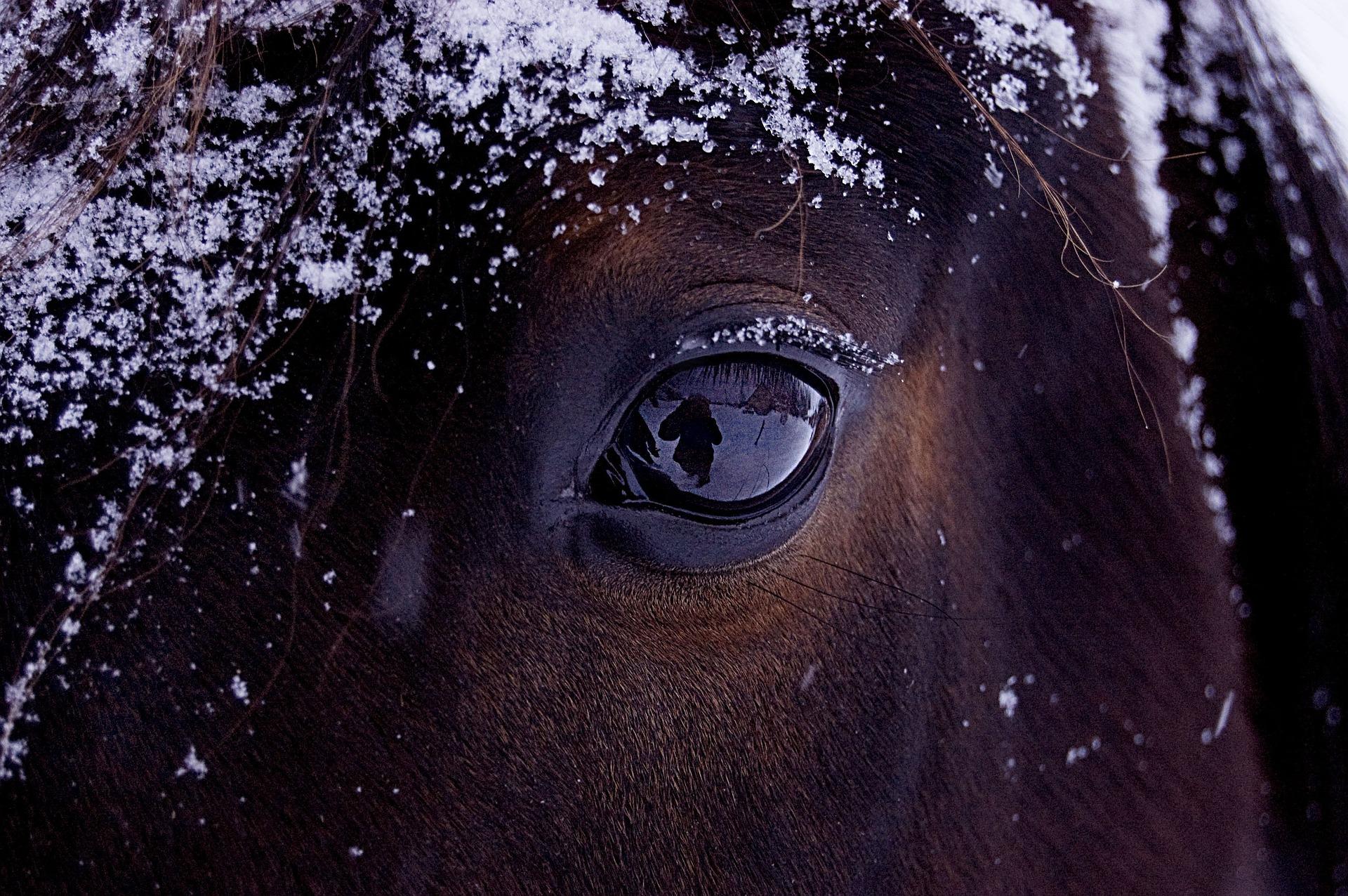 horse-743474_1920